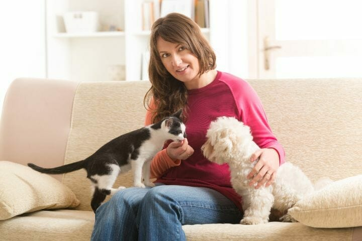 Best Couches For Cat Owners