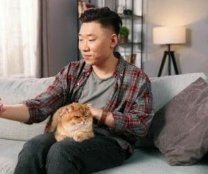 The 7 Best Couches For Cat Owners